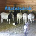 Csongrád Országos Állatvásár 2014. július 03.