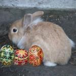 Húsvét Húsvéthétfő 2014 április 21