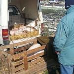 Mohács országos állat és kirakodóvásár 2015. május 16.