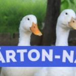 Szent-Márton-nap 2019, Márton napi programok 2019
