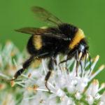 XXXII. Országos Méhésztalálkozó és Vásár 2020