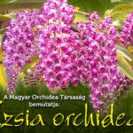 Tavaszi Orchidea és Bromélia Fesztivál 2019