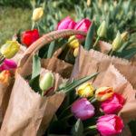 Tulipánszüret és Piknik Szőlősgyörökön 2019